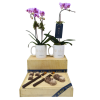 Mini Orchid Plants & Chocolates